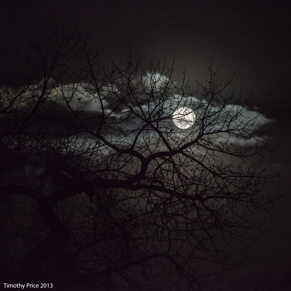 MoonThroughTree