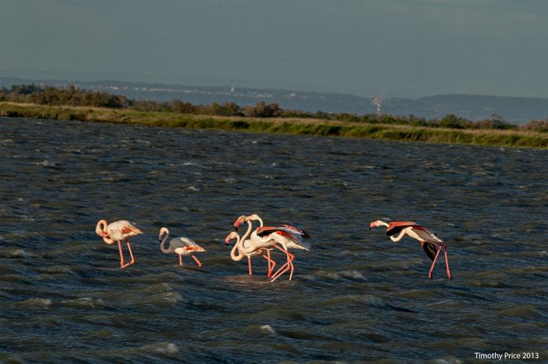 FlamingoLanding