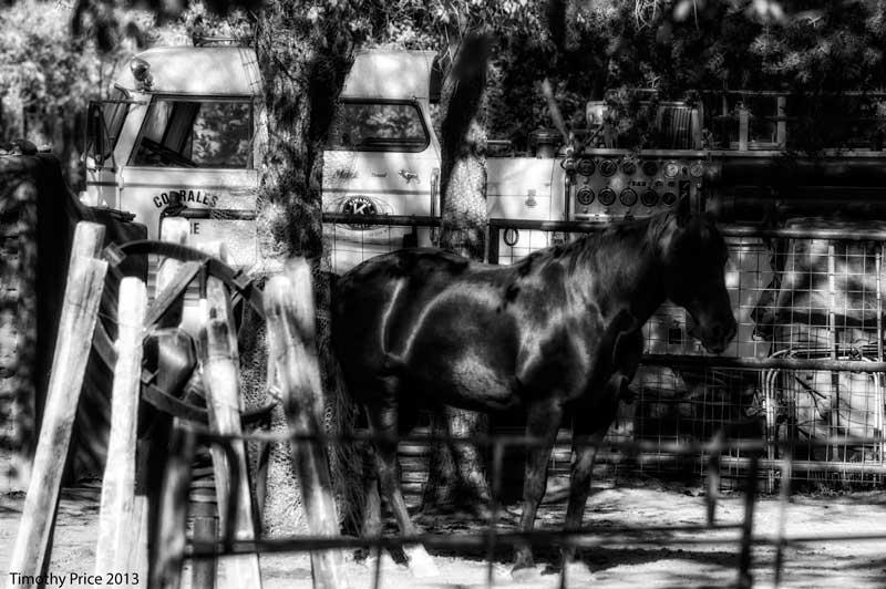 HorseFireTruck