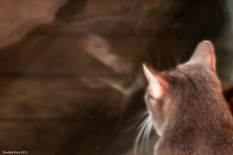 KittyReflecting