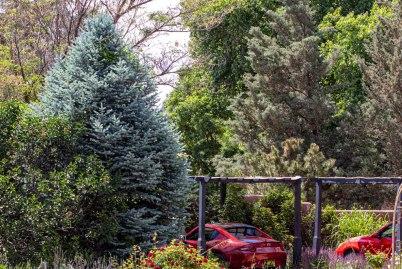 13) Gloria's Tree