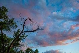 2) Holly's Tangle Heart Tree