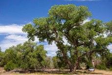 11) Robin's Tree