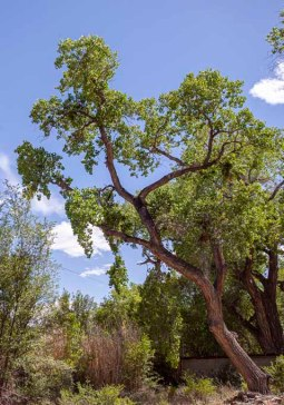 9) Gabriela's Tree