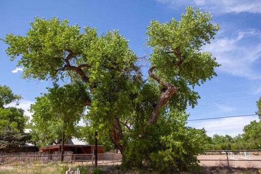 1) Resa's Tree